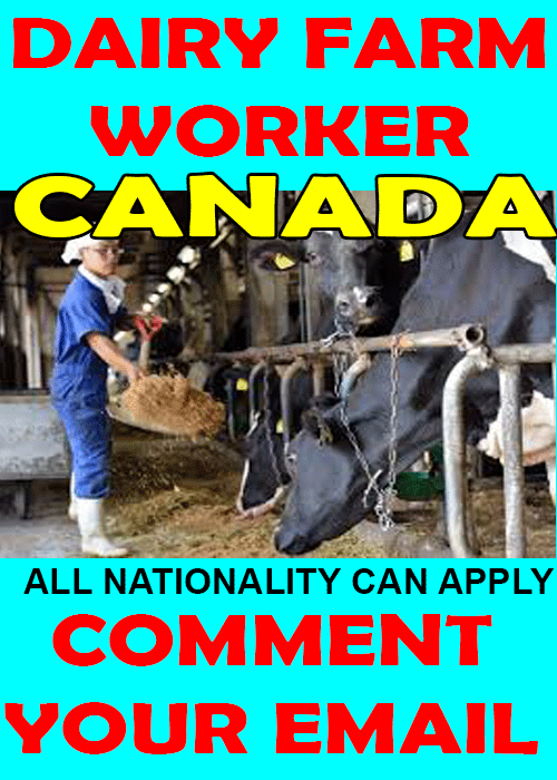dairy farm worker  male  female  urgently required for